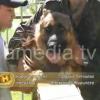На службу с собакой в Армавире. Видео