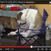 Твои Новости, Выставка собак в Армавире