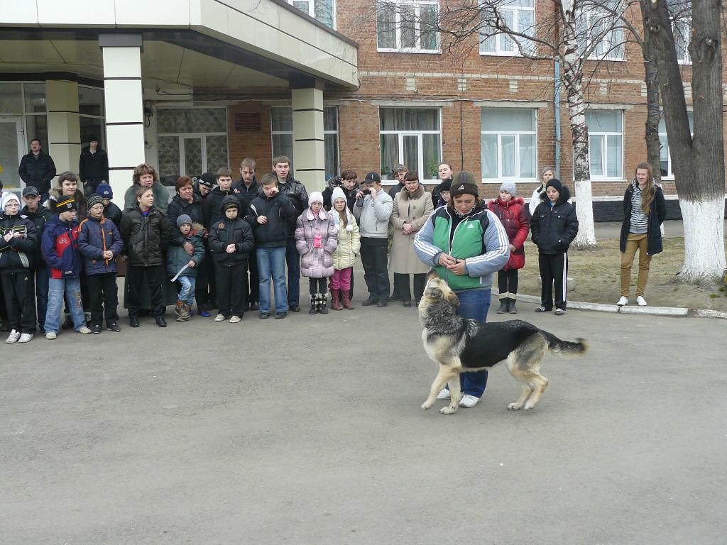 Собака на службе поводыря людей