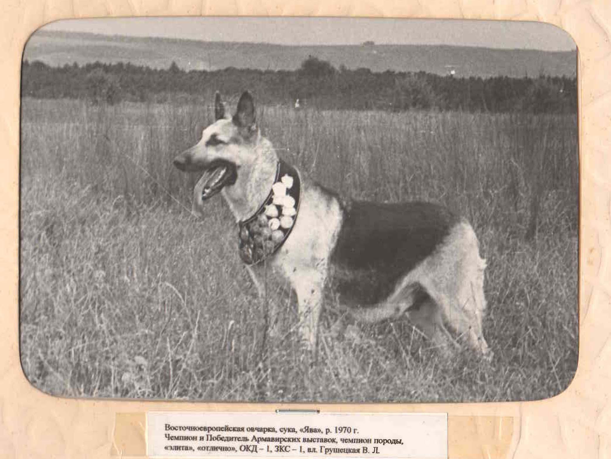 ВЕО Ява, 1970 г. р., вл. Грушецкая В.Л.