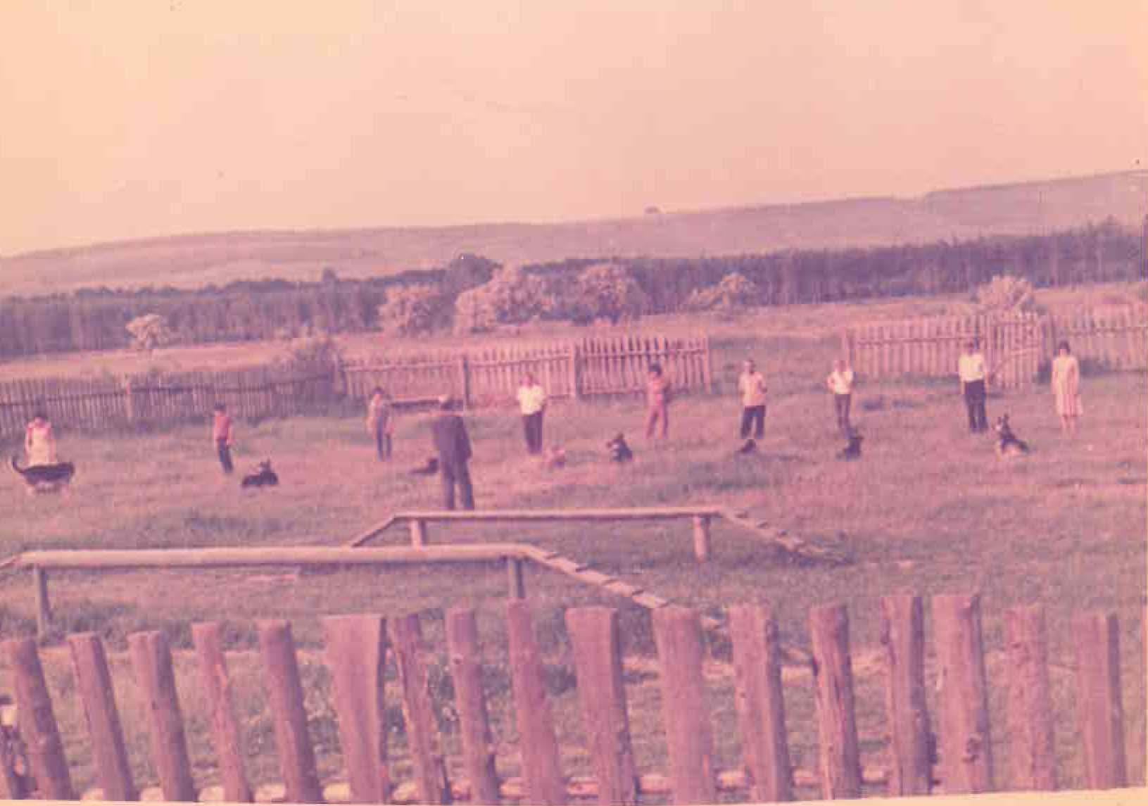 Вид на учебно-дрессировочную площадку клуба . Район 21 Линии