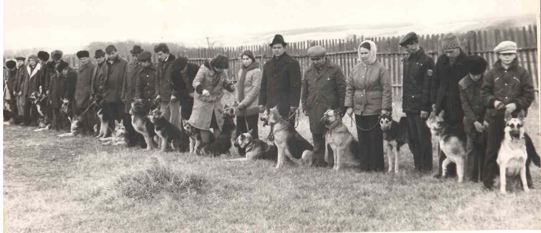 Открытие выводки племенных собак. 1975 год.