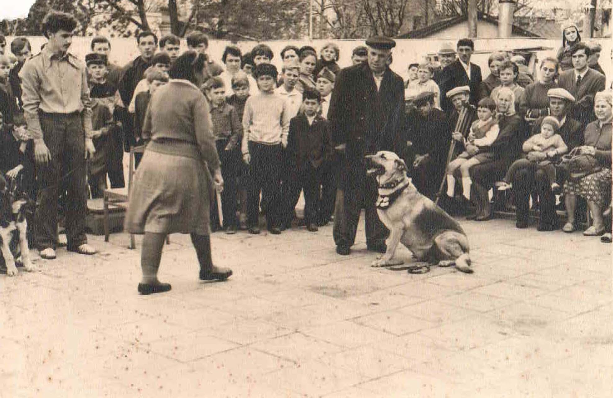 Показательные выступления в городском парке. Супруги Шаврей с ВЕО Гроза. 1970 год.