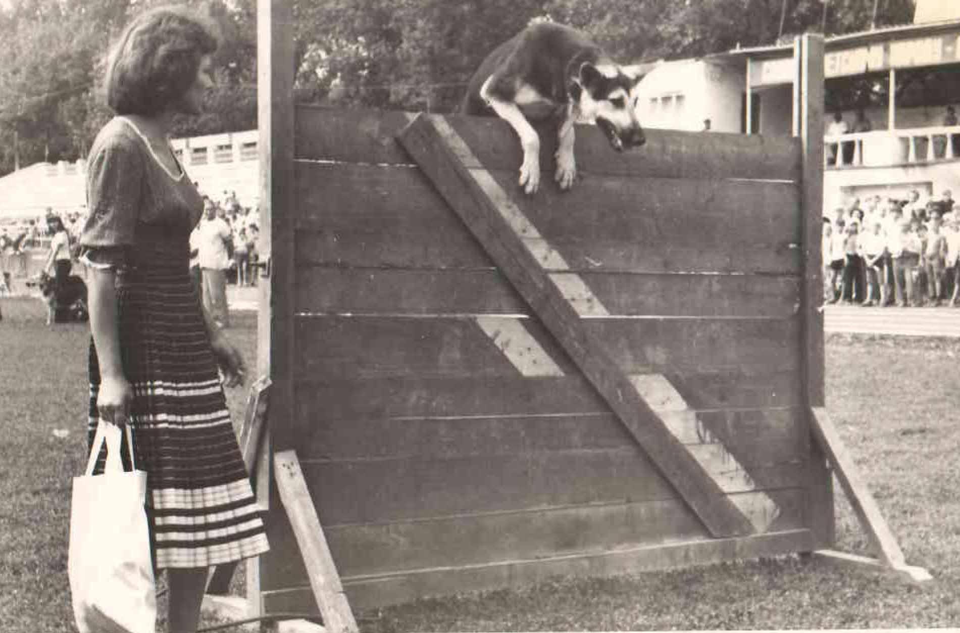 Показательные выступления на выставке служебных собак. 1980 г.